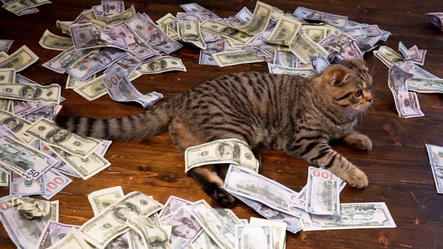 the cat of the rich - profit stock videos & royalty-free footage