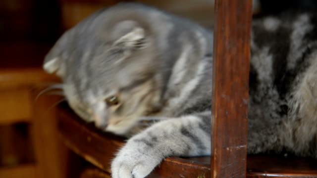 The cat sits on a wooden chair under the table video