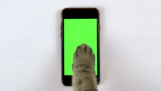 The cat uses a phone. The paw of a cat makes swipe on the gadget and puts likes. Phone with a green background.
