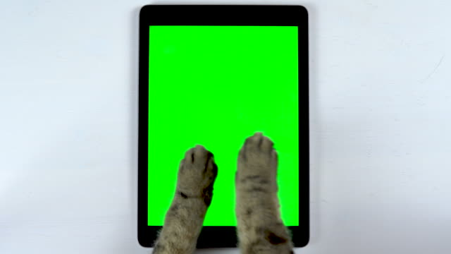 The cat uses a tablet. A close-up of a cat's paws punching a tablet and chatting. Tablet with a green background.