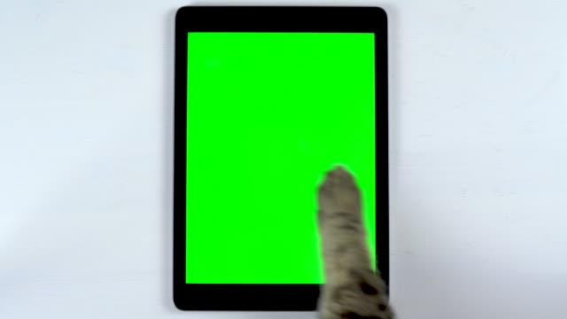 kot używa tabletki. łapa kota sprawia, że machnięcia na tablecie i stawia lubi. tablet z zielonym tłem. - łapa filmów i materiałów b-roll