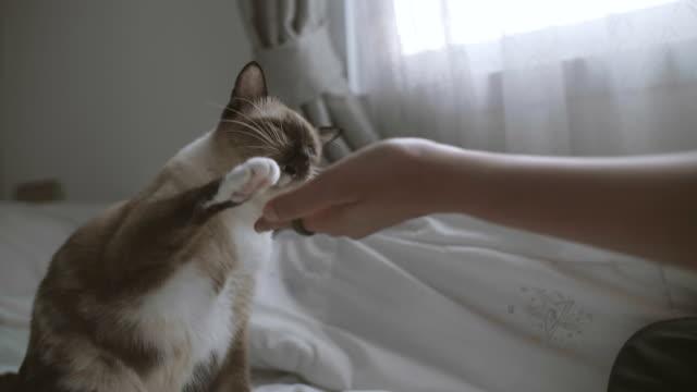 El tobillo de gatos golpea a su mujer en el dormitorio. - vídeo