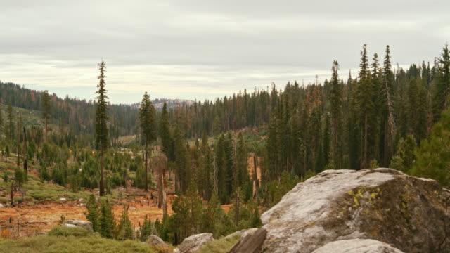 過去の山火事の兆候と杉の森ヨセミテ国立公園には、シエラネバダ山脈、 - カリフォルニアシエラネバダ点の映像素材/bロール