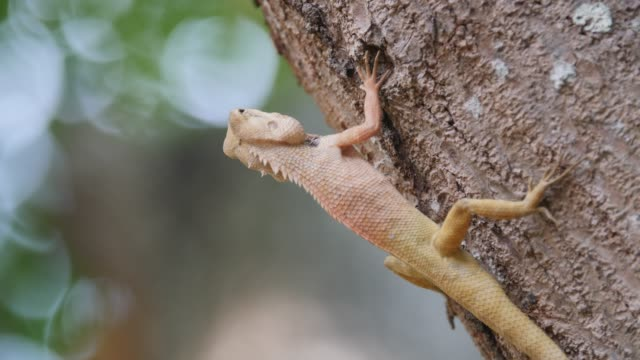 The chameleon is on the tree