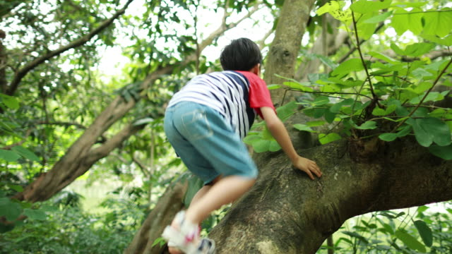 the child on a tree - inerpicarsi video stock e b–roll