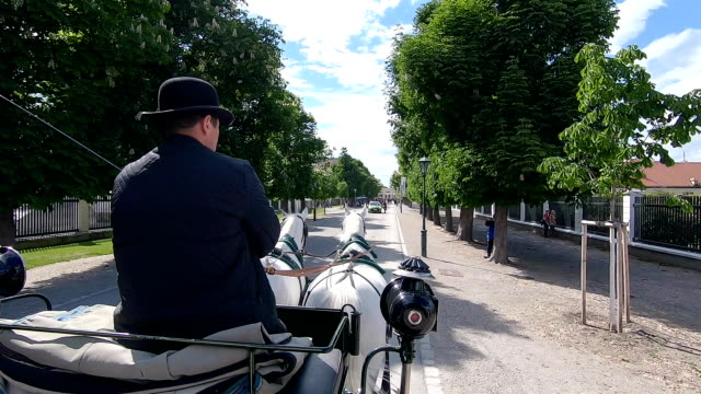The coachman rides a carriage through the park.