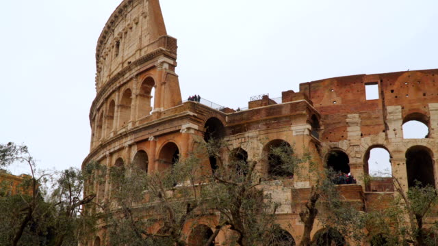 The Coliseum in Rome. In the foreground there are olive trees video