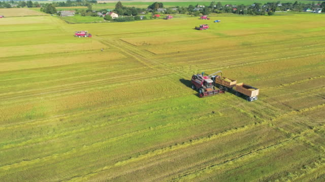 The combine harvester unloads wheat into the truck. The combine harvester unloads wheat into the truck. Flying in a circle counter-clockwise. crop plant stock videos & royalty-free footage
