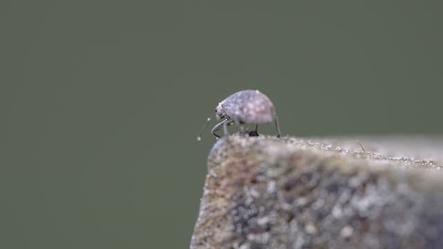 The crawling weevil beetle on the tree log