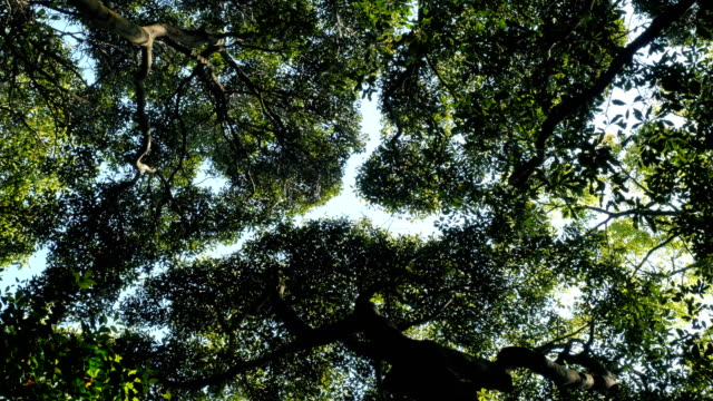 the crown shyness video