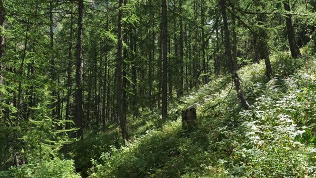 the crévoux valley, embrun, hautes alpes department, france - hautes alpes stock videos & royalty-free footage