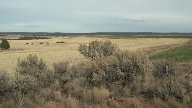 The desert in New Mexico video