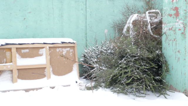 The discarded Christmas tree after the new year on the trash, winter, blizzard