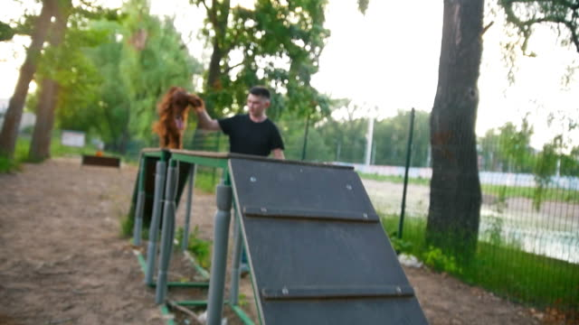 The dog irish setter training with host on playground The dog irish setter training with host on playground, slow motion irish setter stock videos & royalty-free footage