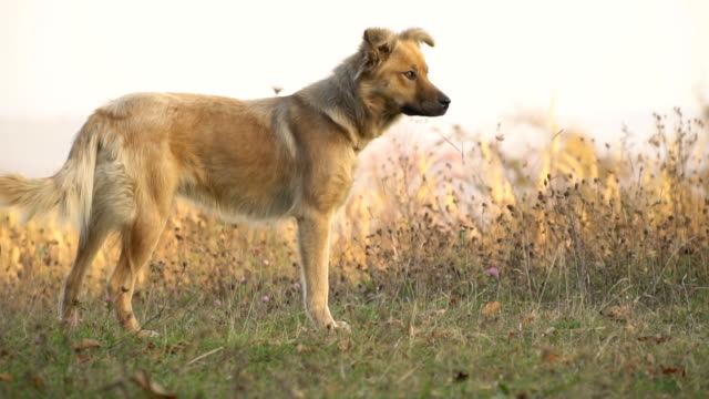 the dog is running the dog is running on a dirt road hound stock videos & royalty-free footage