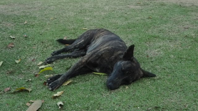 The dog is sleeping on the green grass