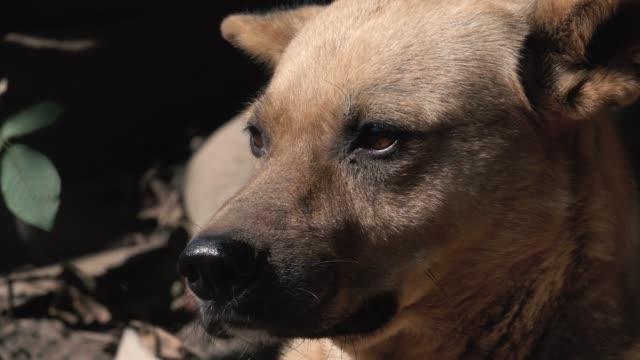 狗躺在鳥舍裡,環顧四周 - 亞洲中部 個影片檔及 b 捲影像