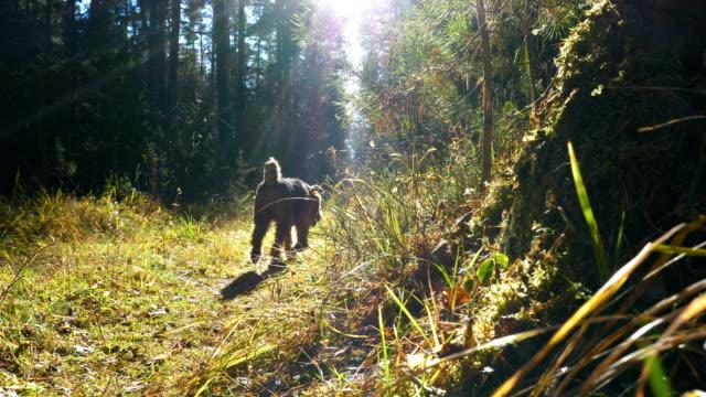 hunden springer genom den soldränkta gläntan i höst skogen. - hund skog bildbanksvideor och videomaterial från bakom kulisserna