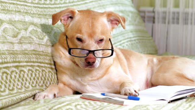 The dog with glasses. Education concept