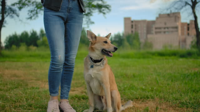 the dog with no leash starts to walking next to unrecognizable female's legs - fedeltà video stock e b–roll