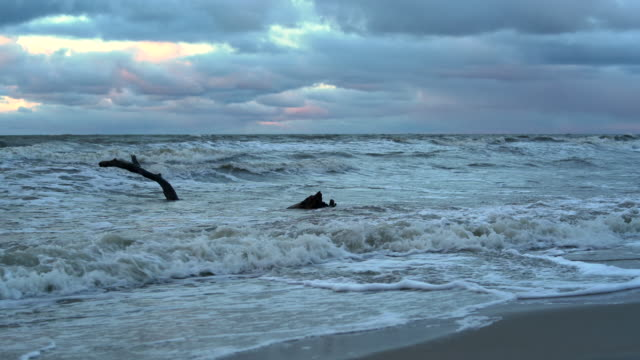 The dramatic cloudy sky over the Baltic sea at the sunset, with the driftwood in the water near by coast video
