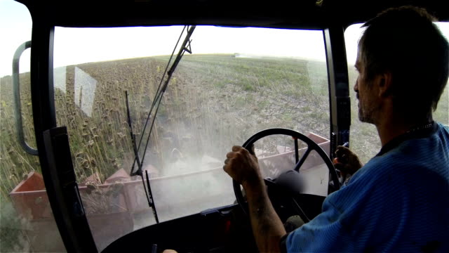 The driver operates with a combine harvester during harvesting of sunflower. View from the cockpit. video