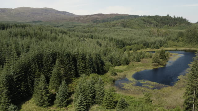 The drone view of part of a small Scottish loch in an area of forest in Dumfries and Galloway, south west Scotland The view from a drone of a small Scottish loch in a remote rural area of Dumfries and Galloway, south west Scotland. The footage was captured in the morning of a summer day. galloway scotland stock videos & royalty-free footage