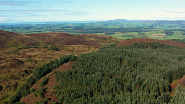 The drone view of Scottish countryside in early morning summer sunlight The view from a drone as it is flown above a hill. The scene includes pine forest and heather growing on the hillside. The rural landscape is seen in the background. The location is in Dumfries and Galloway, south west Scotland. galloway scotland stock videos & royalty-free footage