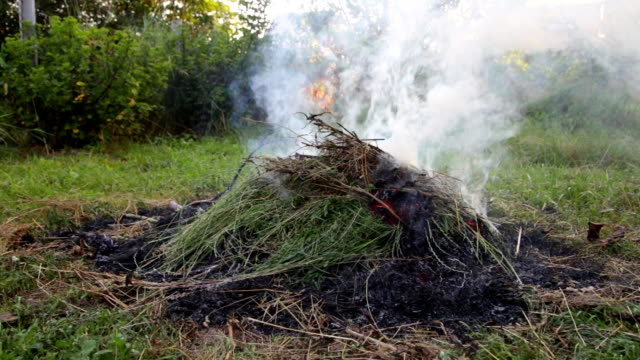 The dry grass in the field burns inflated by a wind video