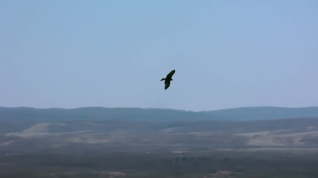 The eagle flies in the sky above the river and hunts small birds