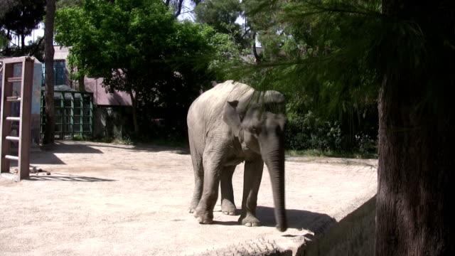 The elephant video
