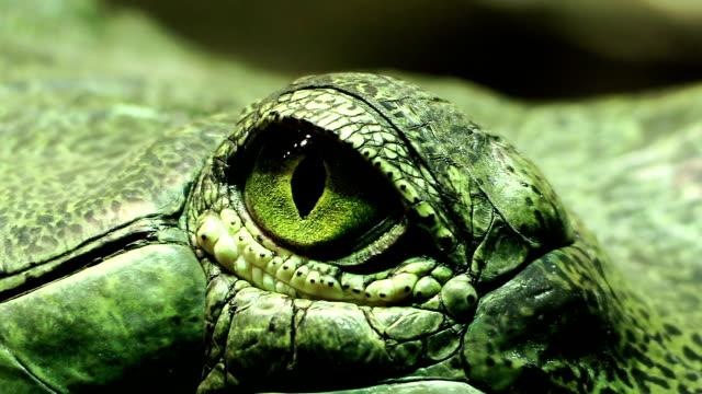 the eye of a green reptile; crocodile video