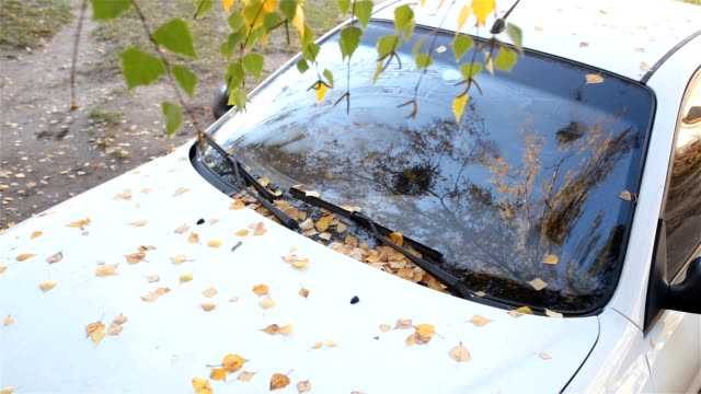 The fallen leaves of the birch on a white car. video