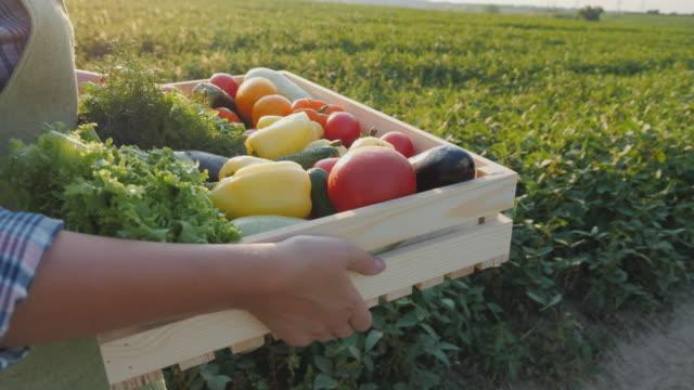 農夫は彼の分野に沿って野菜と緑の箱を運ぶ - 籠点の映像素材/bロール