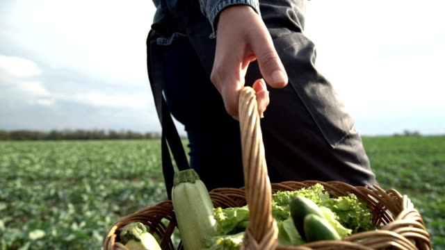The farmer is holding a basket of organic vegetables video