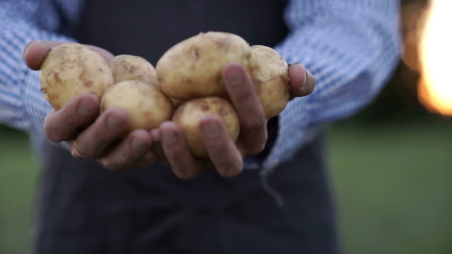 The farmer is holding a biological product of potatoes