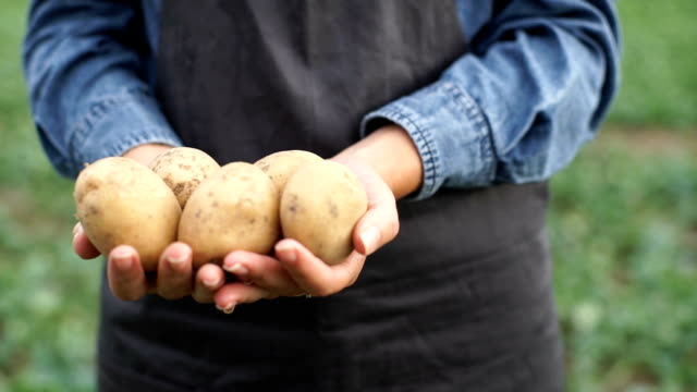 the farmer is holding a biological product of potatoes - patate video stock e b–roll