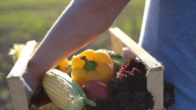 der bauer hält eine kiste mit bio-gemüse - gemüsegarten stock-videos und b-roll-filmmaterial