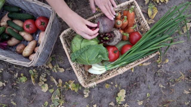 農夫は有機野菜の箱を持っている - 籠点の映像素材/bロール