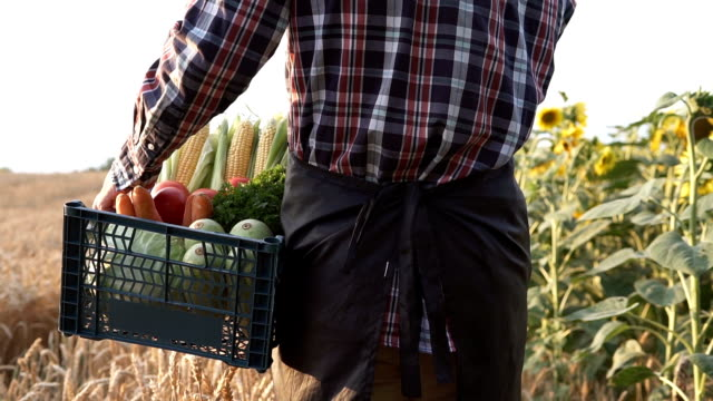 The farmer is holding a box of organic vegetables - vídeo