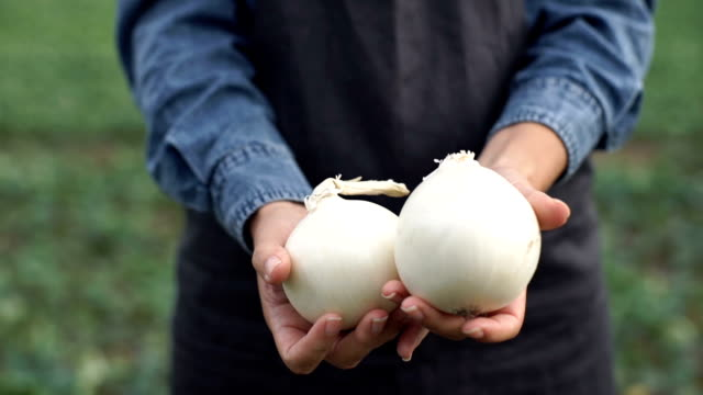 The farmer is holding a white onion The farmer is holding a white onion onion stock videos & royalty-free footage