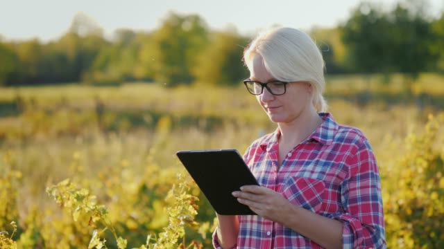 The farmer uses a tablet in the field. At sunset video