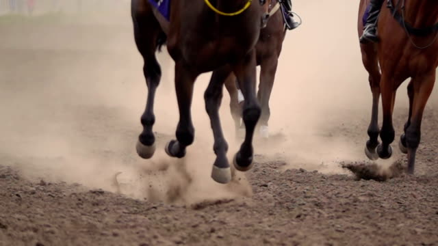 The Feet of the Horses at the Racetrack. video
