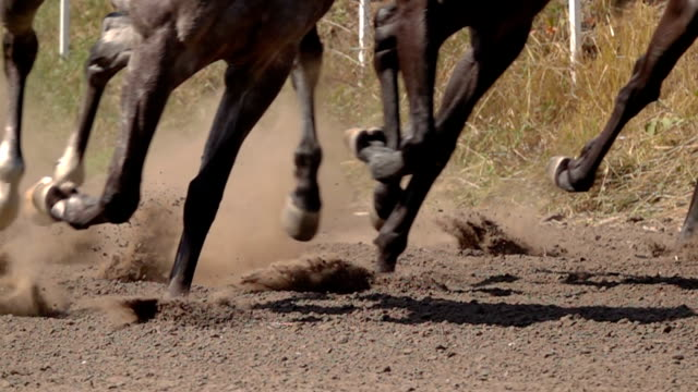 The Feet of the Horses at the Racetrack video