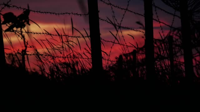The fence with barbed wire and grass on the background of a cloudy red-blue sky.