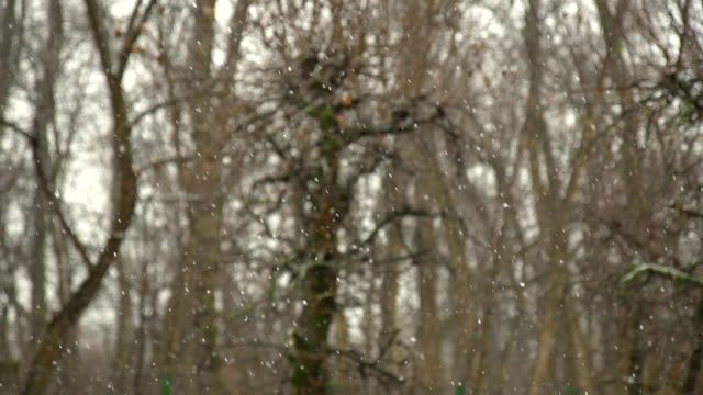 HD SUPER SLOW-MO: The First Snowflakes video