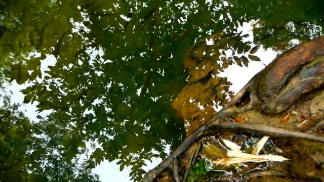 sığ bir dere içinde te güneş ışınları ormanlarında balık yüzmek - i̇htiyoloji stok videoları ve detay görüntü çekimi