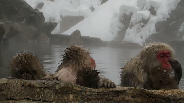 kar maymunlar aile (anne ve bebek) görüntüleri sırılsıklam-banyo-kaplıca (onsen, sıcak banyo) jigokudani snow monkey park kış sezonunda karlı bir günde rahatlatıcı, nagano japonya - makak maymunu stok videoları ve detay görüntü çekimi