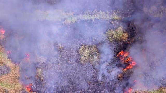 skogs elden brinner - skog brand bildbanksvideor och videomaterial från bakom kulisserna