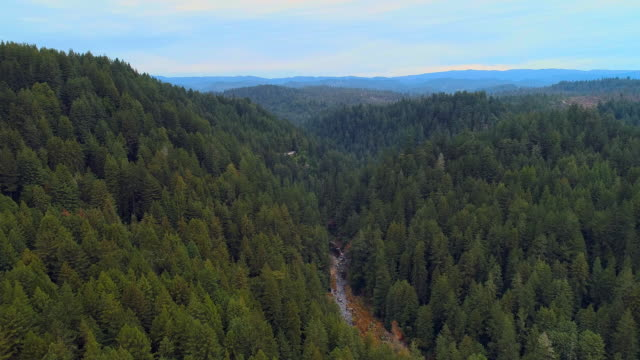 The forest of Sequoias in Northern California, USA West Coast - vídeo